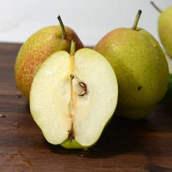 新疆库尔勒香梨 5斤 新疆小香梨